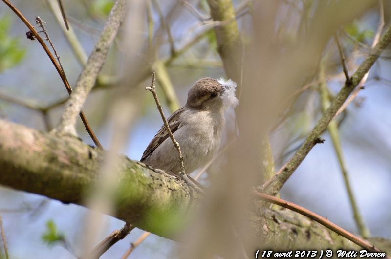 pour le plaisir Dpp_-oiseaux--0007-3d87bc0