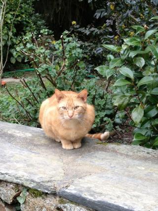 Cherche FA proche Redon pour plusieurs chats Img_1004-3ceed13