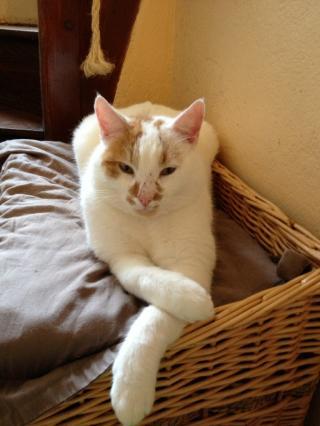 Cherche FA proche Redon pour plusieurs chats Img_0800-3b44351