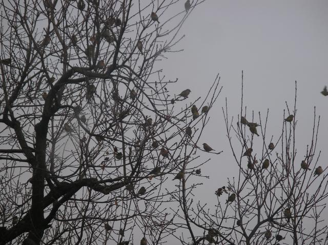 arbre à oiseaux Imgp7067-3c3eb77
